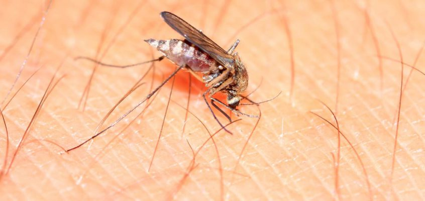Todo lo que debes saber sobre el Virus Zika